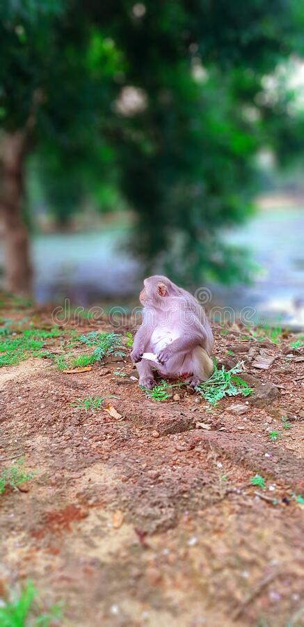 Cute Little monkey sit on a garden. A Very Beautiful small Cute monkey sit a floor of a garden royalty free stock photography