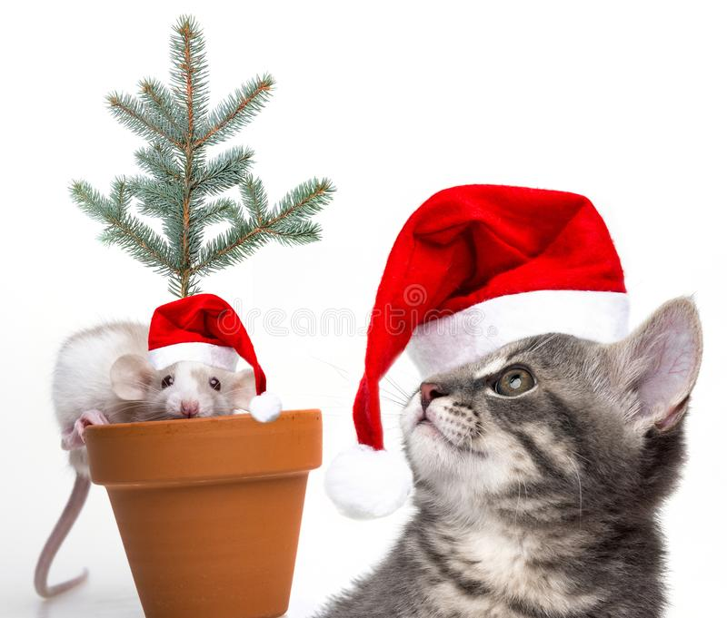 Cute little mouse and cat with santa caps. White background royalty free stock photography