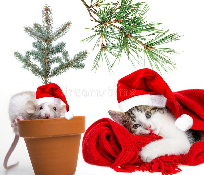 Cute little mouse and cat with santa caps. White background royalty free stock image