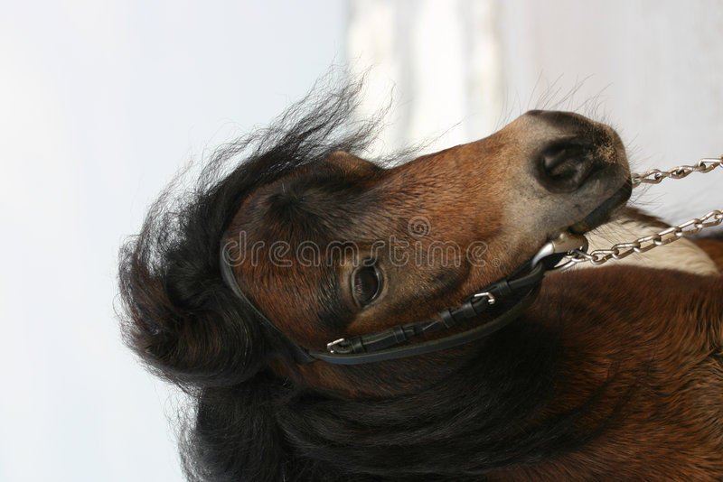 Cute little pony royalty free stock image