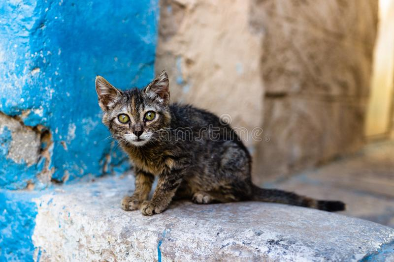 Cute little cat in the streets of Tzefat. royalty free stock image