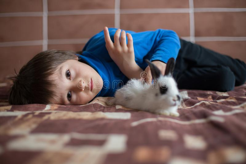 Cute little preschool boy, playing with pet rabbits at home royalty free stock photos
