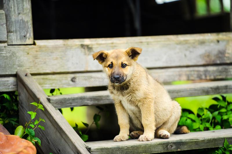 Cute little puppy. Adorable, animal, background, beautiful, black, breed, brown, canine, dog, doggy, domestic, face, funny, happy, look, mammal, nature royalty free stock photo