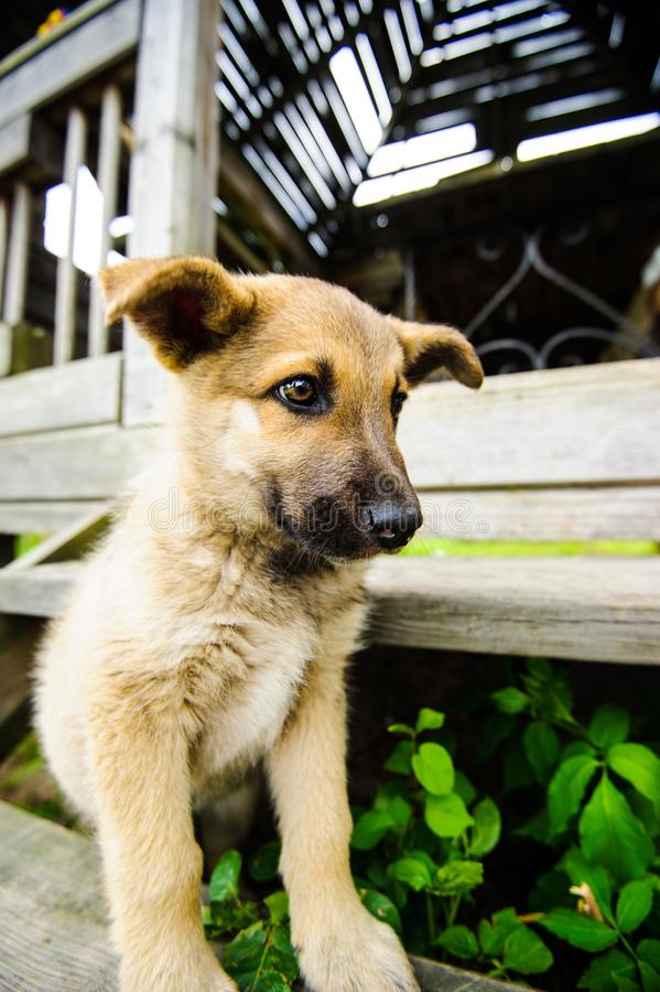 Cute little puppy. Adorable, animal, background, beautiful, black, breed, brown, canine, dog, doggy, domestic, face, funny, happy, look, mammal, nature royalty free stock images