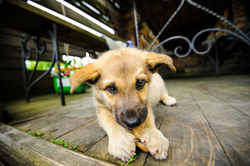 Cute little puppy. Adorable, animal, background, beautiful, black, breed, brown, canine, dog, doggy, domestic, face, funny, happy, look, mammal, nature royalty free stock photography