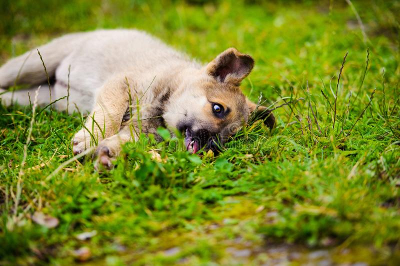 cute little puppy royalty free stock photos