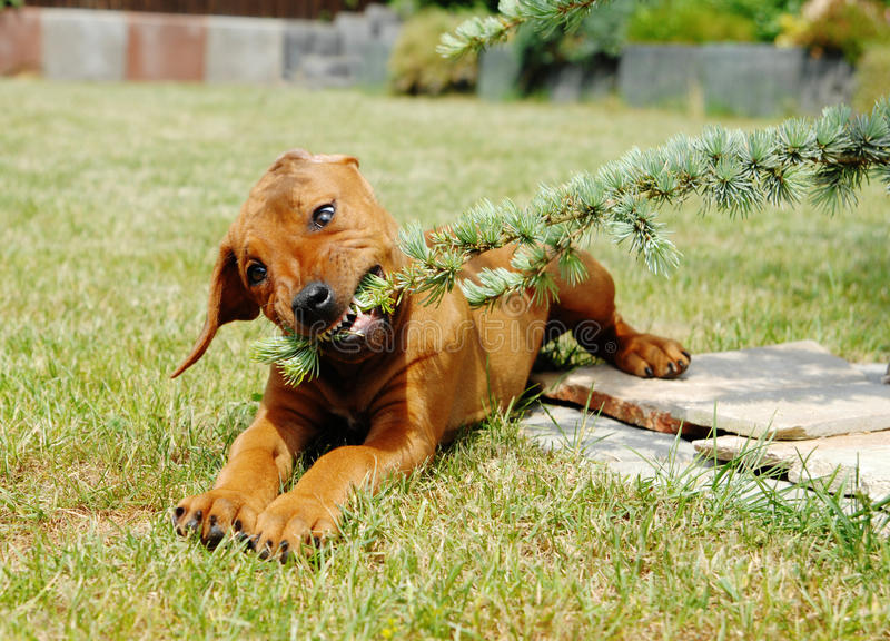 Cute little puppy playing in garden royalty free stock photo