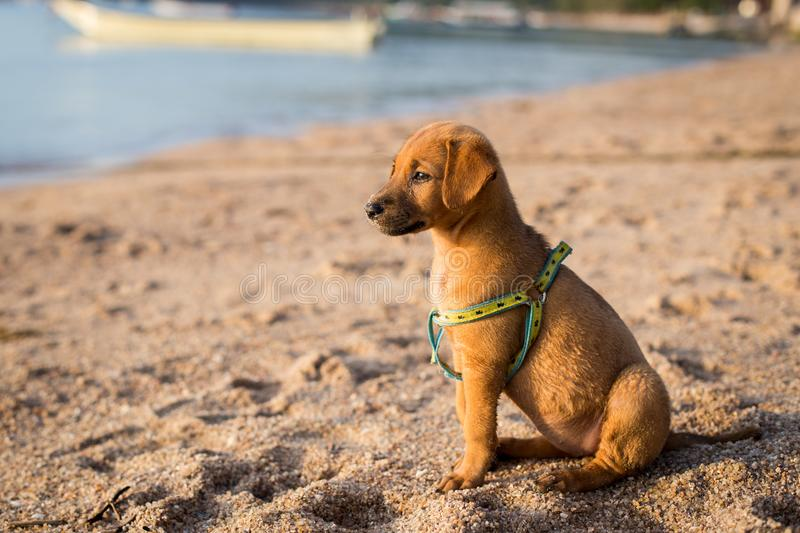 Cute puppy on the beach stock image