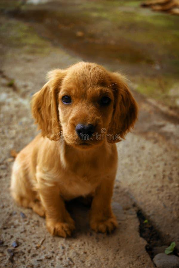 Cute little pupy stock photo