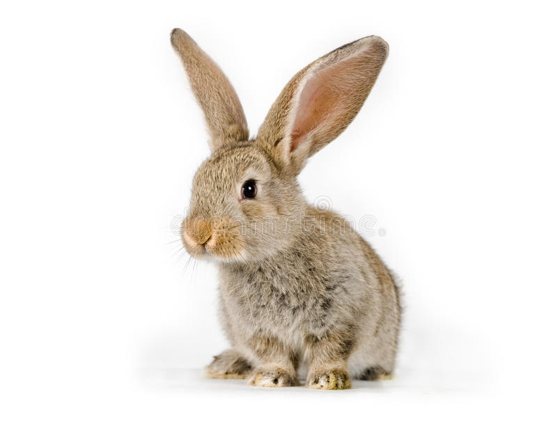 Cute little rabbit stock photo