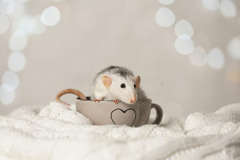 Cute little rat in cup on knitted blanket. Chinese New Year symbol. Cute little rat in cup on knitted blanket against blurred lights. Chinese New Year symbol stock photo