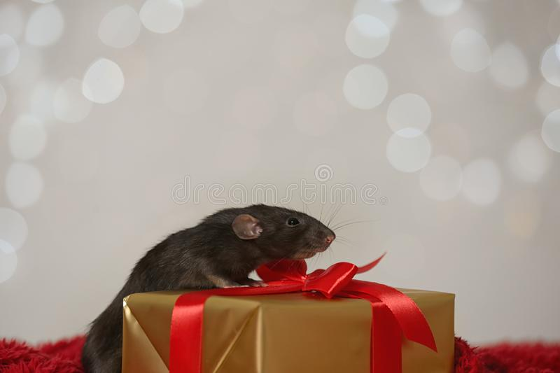 Cute little rat and gift box on red fluffy blanket against lights. Chinese New Year symbol. Cute little rat and gift box on red fluffy blanket against blurred royalty free stock photos