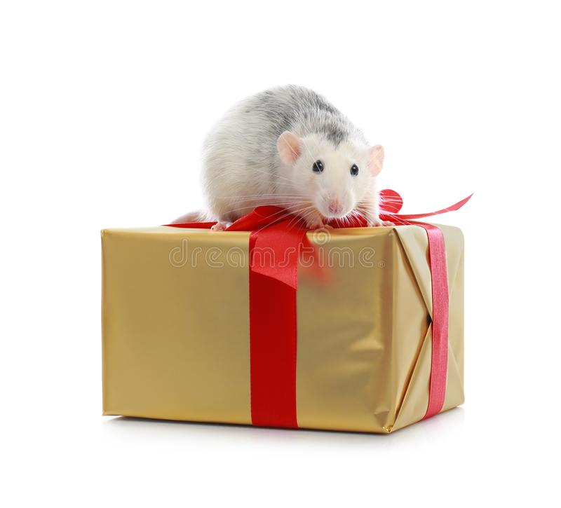 Cute little rat and gift box on white. Chinese New Year symbol. Cute little rat and gift box on white background. Chinese New Year symbol royalty free stock images