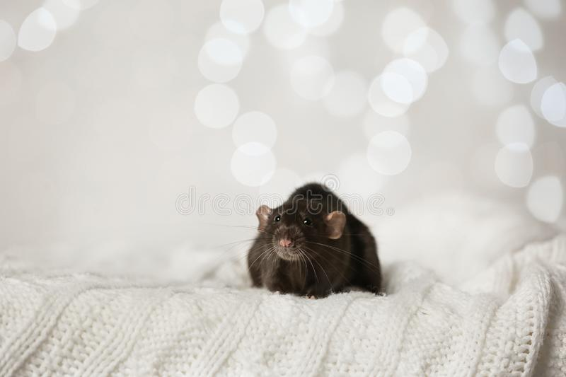 Cute little rat on knitted blanket. Chinese New Year symbol. Cute little rat on knitted blanket against blurred lights. Chinese New Year symbol stock images