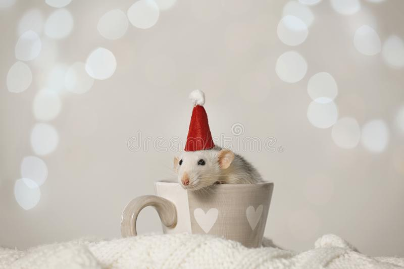 Cute little rat with Santa hat in cup on knitted blanket against lights. Chinese New Year symbol stock photos