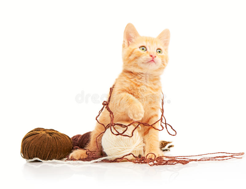 Cute little red kitten playing with balls of yarn and looking straight at camera stock photos
