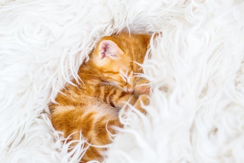 Cute little red kitten sleeps on fur. White blanket stock photography