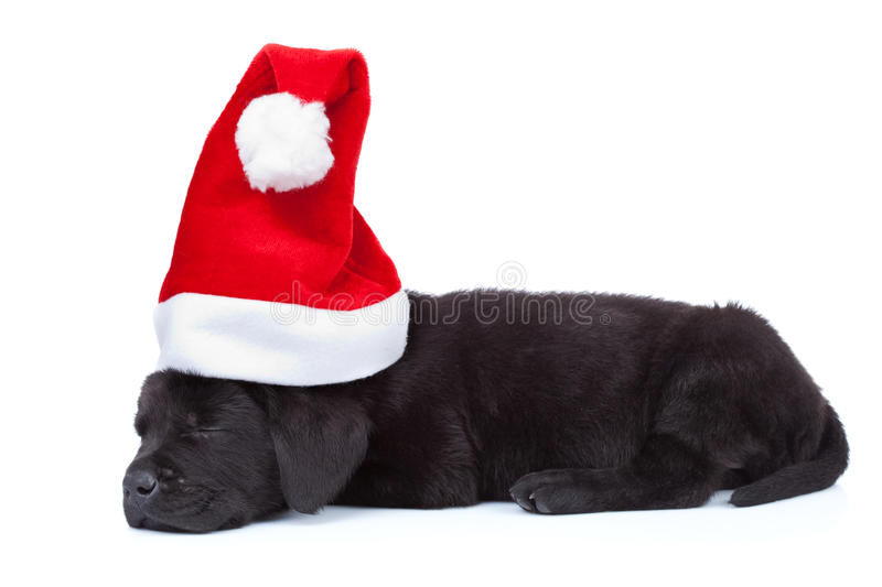 Download Cute little santa stock photo. Image of doggy, adorable - 21362932