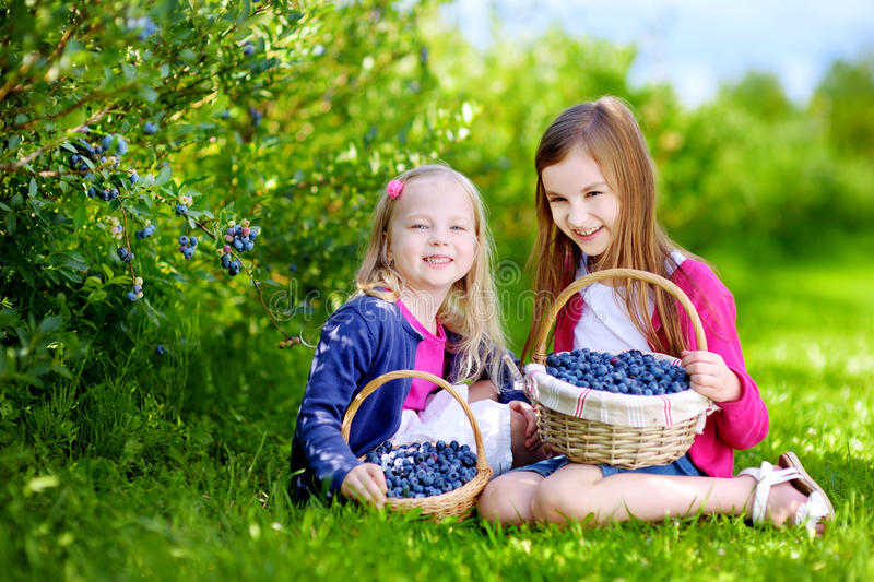 Cute little sisters picking fresh berries on organic blueberry farm stock photos