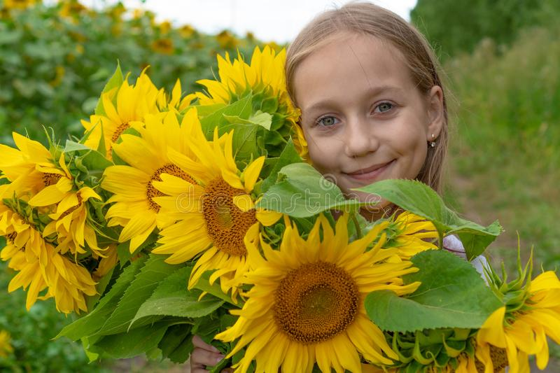 A cute little smiling girl in the field of sunflowers holding a huge bunch of flowers in a sunny summer day stock image