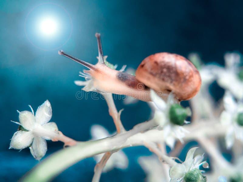 Cute little snails on the mushroom. A closeup. Beautiful background. Cute little snails on the mushroom stock photo