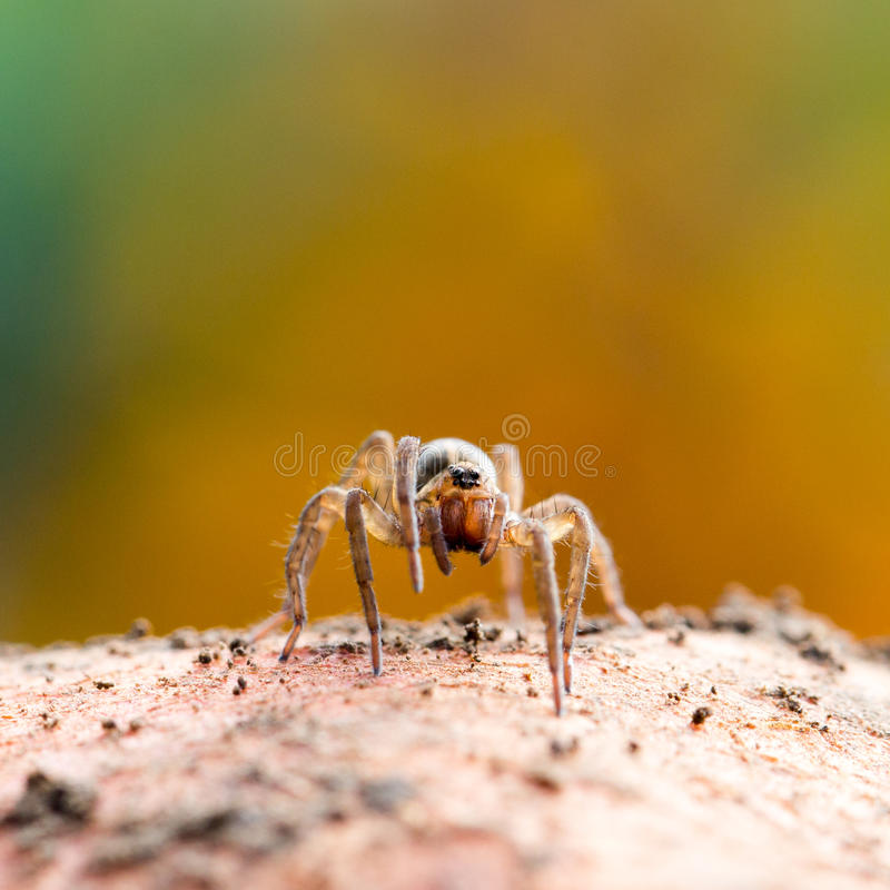 Cute little spider royalty free stock photos