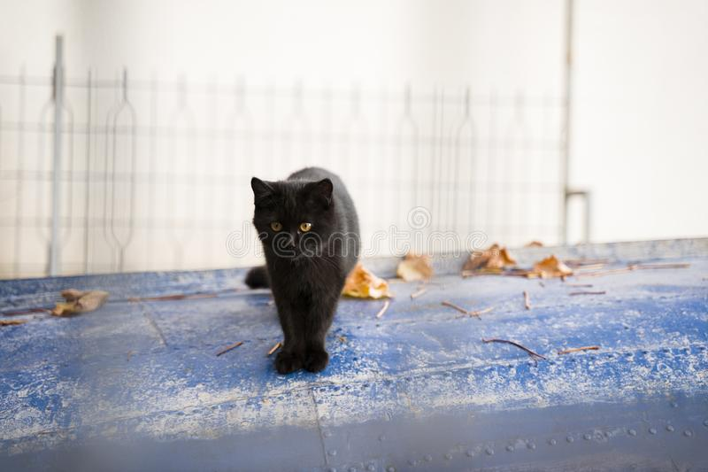 Cute little black cat with magnificent eyes standing on a lake boat royalty free stock photos
