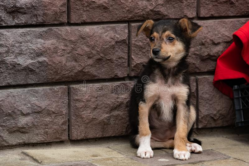 cute little stray mongrel puppy. Little black homeless puppy dog sitting on street. soft selective focus, space for text stock images