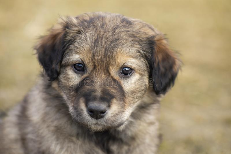 Cute little stray mongrel puppy. Portrait of little brown homeless puppy dog. stock photos