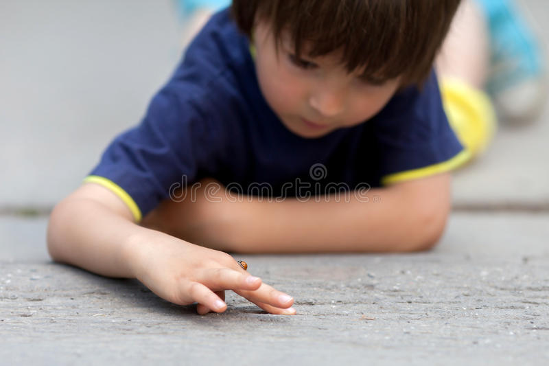 Cute little toddler boy, playing with ladybird. Outdoor in the park, summertime royalty free stock images
