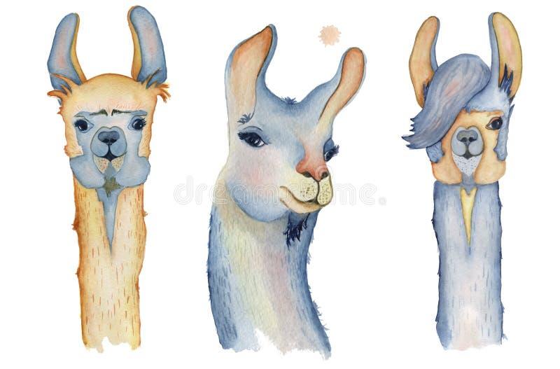 Cute Llama Cartoon Characters Set Watercolor Illustration ... | 800 x 527 jpeg 41kB
