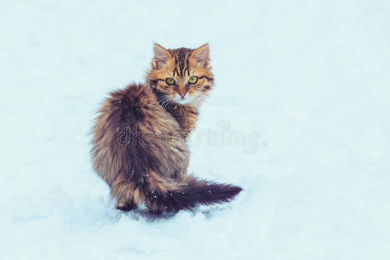Cute kitten walking in the snow royalty free stock photos