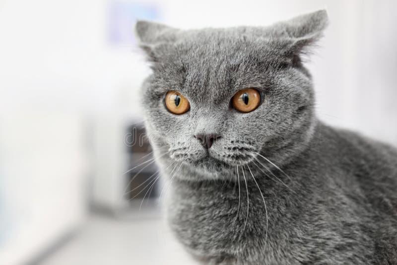 Cute lovely cat royalty free stock photos