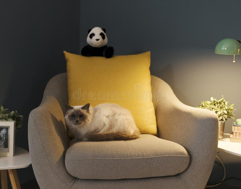 Cute lovely cat relaxing on the armchair. Cute lovely birman cat relaxing on the armchair at home stock photo