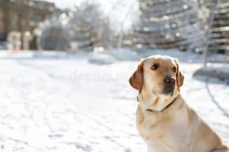 Cute lovely dog outdoors stock image