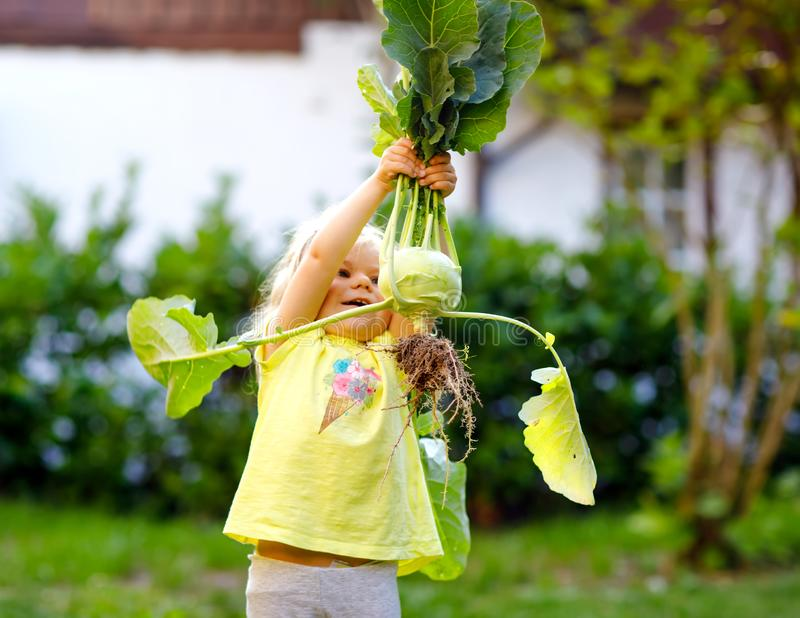 Cute lovely toddler girl with kohlrabi in vegetable garden. Happy gorgeous baby child having fun with first harvest of royalty free stock images