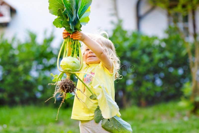 Cute lovely toddler girl with kohlrabi in vegetable garden. Happy gorgeous baby child having fun with first harvest of stock photos