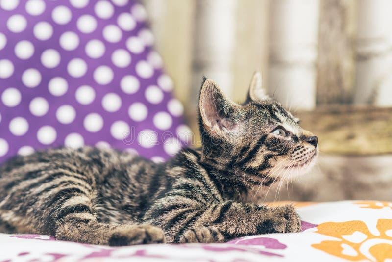 Cute loving little tabby kitten stock images