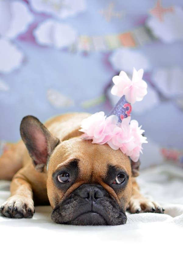 Cute lying fawn French Bulldog dog girl with birthday hat. Greeting card motive stock photos