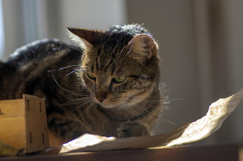 Cute marble cat in sunlight on paper, clever face, eye contact, comical funny beast stock photo