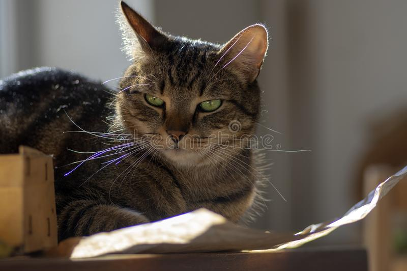 Cute marble cat in sunlight on paper, clever face, eye contact, comical funny beast stock images