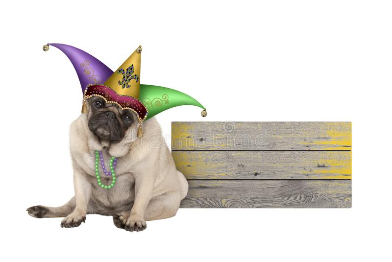 Cute Mardi gras pug puppy dog sitting down with harlequin jester hat, next to wooden board stock images