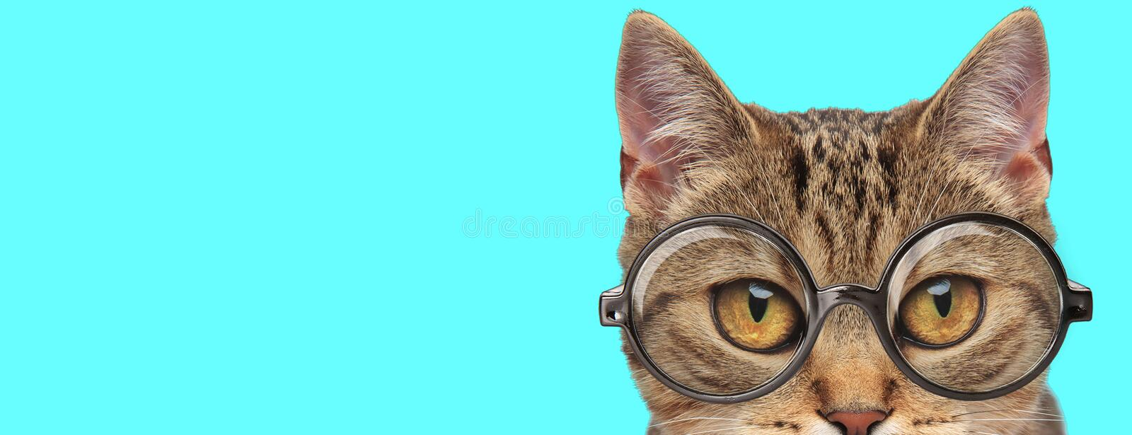 Cute metis cat with eyeglasses and half of face exposed royalty free stock photos