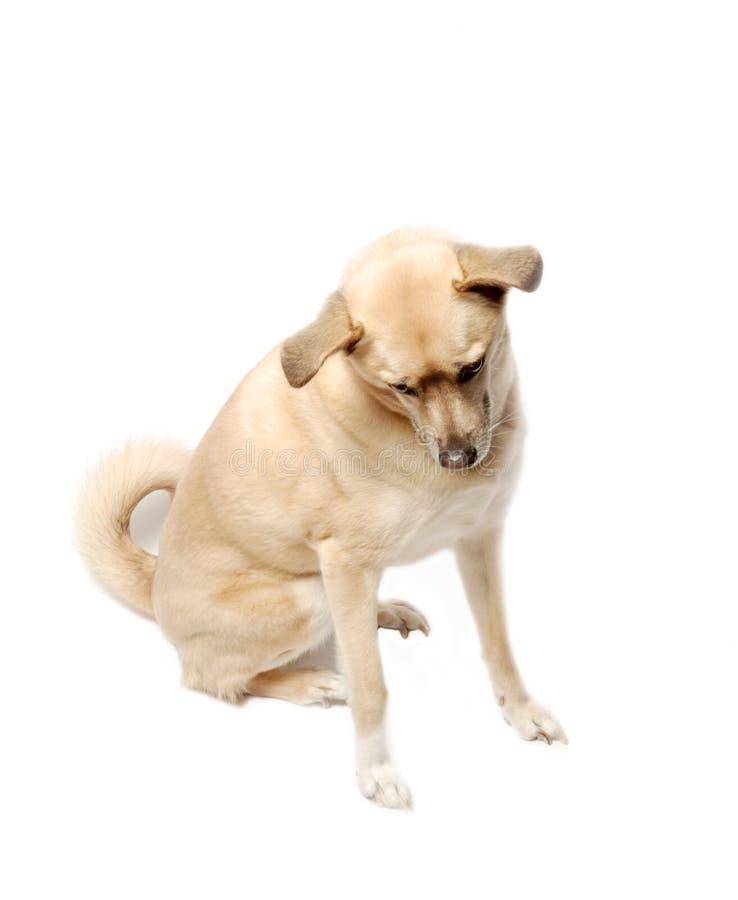 Cute mixed breed dog royalty free stock photo