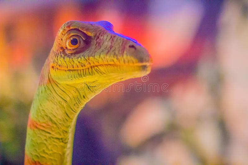 Cute model of Gallimimus dinosaur in the public museum. Gallimimus is a genus of ornithomimid theropod dinosaurs from the late Cr stock photo