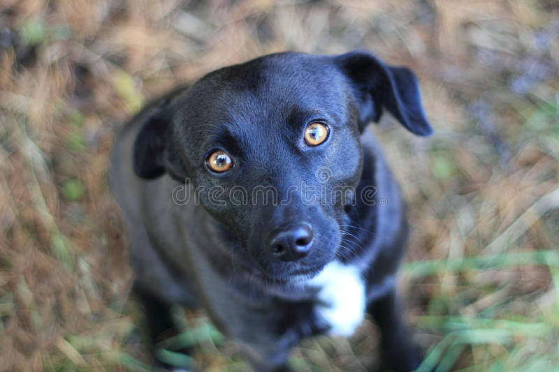 Download Cute mongrel stock photo. Image of young, small, cute - 22166144