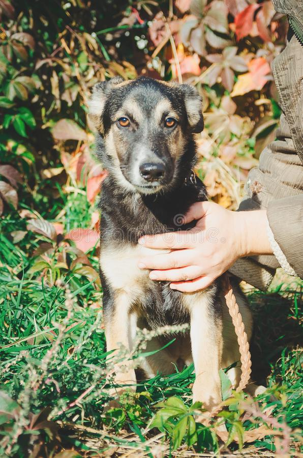 Cute mongrel dog looking at the camera.Close-up.Young puppy. stock photos