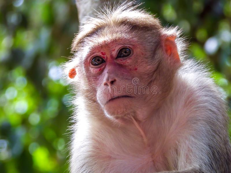 Cute Monkey Closeup. Closeup shot of cute monkey in the tree royalty free stock images