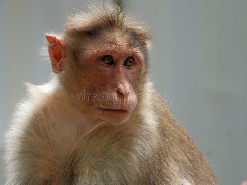 Cute Monkey Closeup. Closeup shot of cute monkey in the tree royalty free stock image
