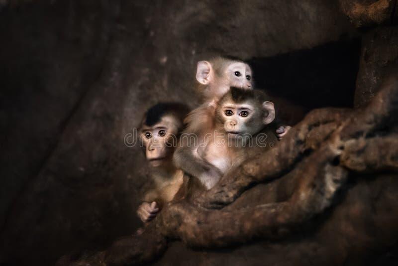 Cute monkey face. Cute little monkey face, portreit in zoo stock photography